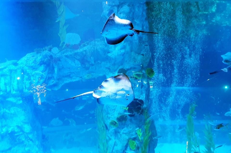 What a Beautiful Marine World! Lotte World Aquarium!!